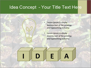 0000081552 PowerPoint Template - Slide 80