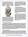 0000081569 Word Templates - Page 4