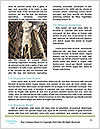 0000081576 Word Template - Page 4