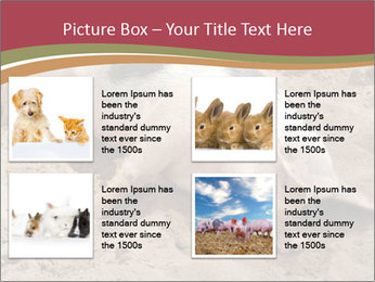 0000081602 PowerPoint Template - Slide 14