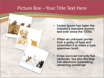0000081602 PowerPoint Template - Slide 17