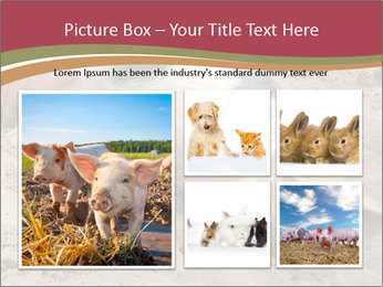 0000081602 PowerPoint Template - Slide 19