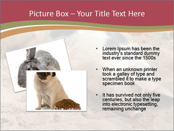 0000081602 PowerPoint Template - Slide 20