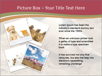 0000081602 PowerPoint Template - Slide 23