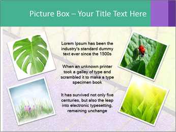 0000081619 PowerPoint Template - Slide 24