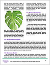 0000081619 Word Templates - Page 4