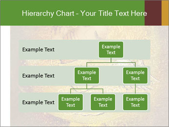 0000081633 PowerPoint Templates - Slide 67