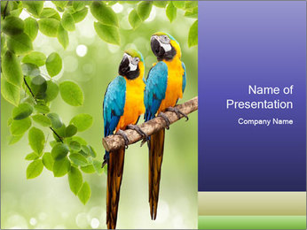 0000081691 PowerPoint Template - Slide 1