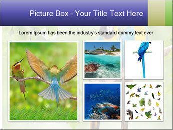 0000081691 PowerPoint Template - Slide 19
