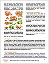 0000081697 Word Templates - Page 4