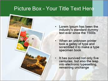 0000081710 PowerPoint Template - Slide 17