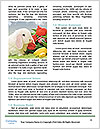0000081710 Word Template - Page 4