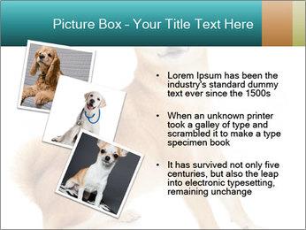 0000081726 PowerPoint Template - Slide 17