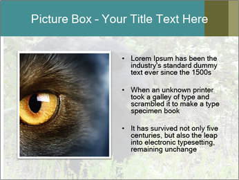 0000081738 PowerPoint Template - Slide 13