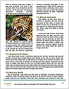0000081738 Word Template - Page 4