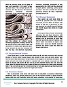 0000081767 Word Templates - Page 4