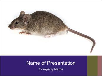 0000081791 PowerPoint Templates - Slide 1