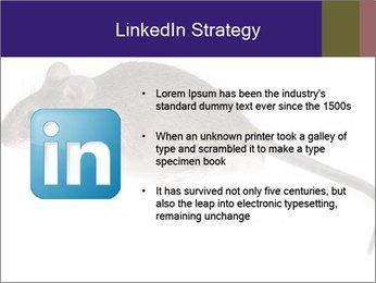 0000081791 PowerPoint Templates - Slide 12