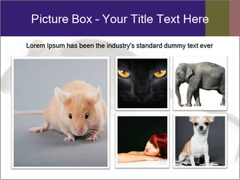 0000081791 PowerPoint Templates - Slide 19