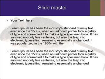 0000081791 PowerPoint Templates - Slide 2