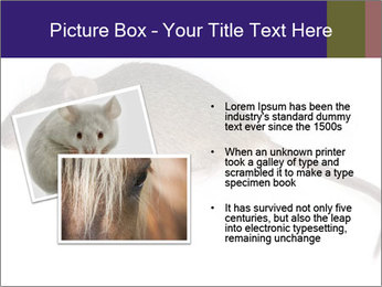 0000081791 PowerPoint Templates - Slide 20