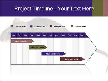 0000081791 PowerPoint Templates - Slide 25