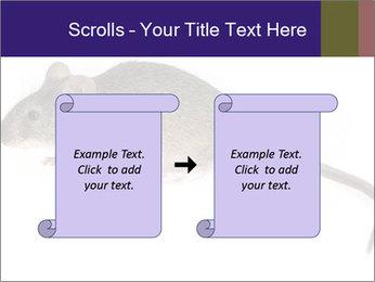 0000081791 PowerPoint Templates - Slide 74