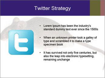 0000081791 PowerPoint Templates - Slide 9