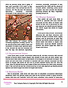 0000081795 Word Templates - Page 4