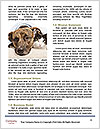0000081802 Word Templates - Page 4