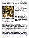 0000081838 Word Templates - Page 4