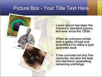 0000081845 PowerPoint Templates - Slide 17