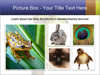 0000081845 PowerPoint Templates - Slide 19