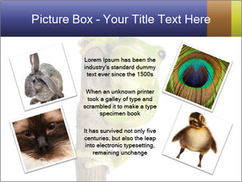 0000081845 PowerPoint Templates - Slide 24