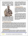 0000081845 Word Template - Page 4