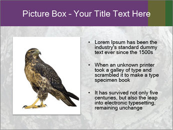0000081909 PowerPoint Template - Slide 13