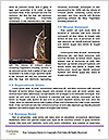 0000081999 Word Template - Page 4