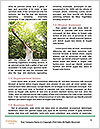 0000082062 Word Template - Page 4