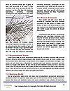 0000082097 Word Templates - Page 4
