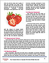 0000082183 Word Templates - Page 4