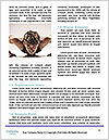 0000082194 Word Template - Page 4