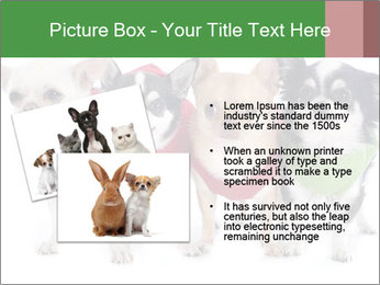 0000082236 PowerPoint Template - Slide 20