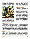 0000082241 Word Template - Page 4