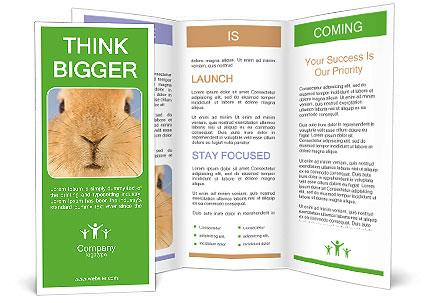 0000082254 Brochure Template