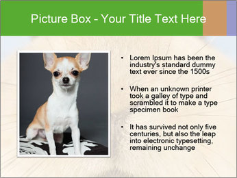 0000082254 PowerPoint Templates - Slide 13