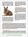 0000082254 Word Templates - Page 4