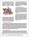 0000082295 Word Template - Page 4