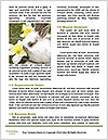 0000082304 Word Template - Page 4