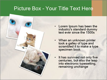 0000082312 PowerPoint Templates - Slide 17