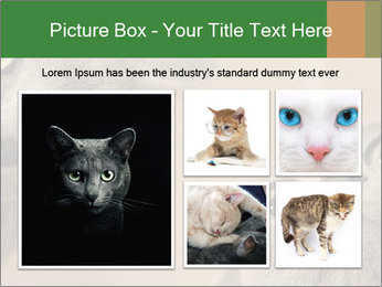 0000082312 PowerPoint Templates - Slide 19